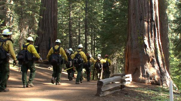 National Park Service (NPS) fire crew enters the Tuolumne Grove of Giant Sequoias to establish defensible space protecting the big trees if the Rim fire advances. The Rim Fire in the Stanislaus National Forest near in California began on Aug. 17, 2013 and is under investigation. The fire has consumed approximately 149, 780 acres and is 15% contained. U.S. Forest Service photo.