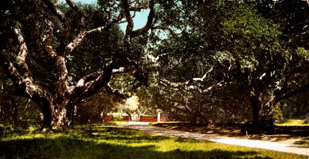 UC Berkeley Faculty Glade, 1900 (Credit: Library of Congress)